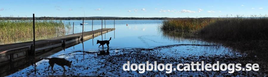 dogblog.cattledogs.se